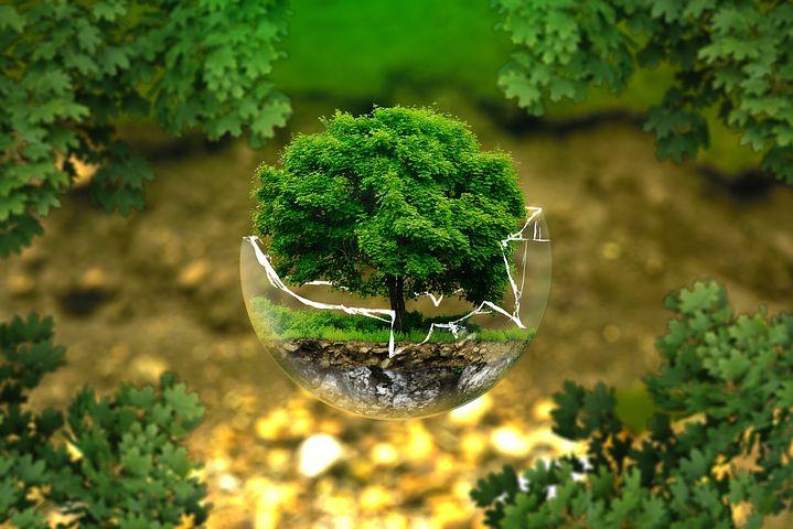 Dessine moi une histoire : des albums sur l'environnement en maternelle et au cycle 2